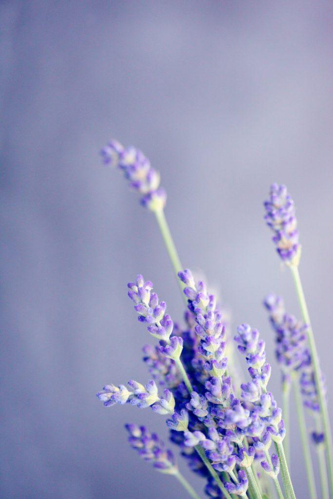 GOOD VIBE FACTORY lavender light
